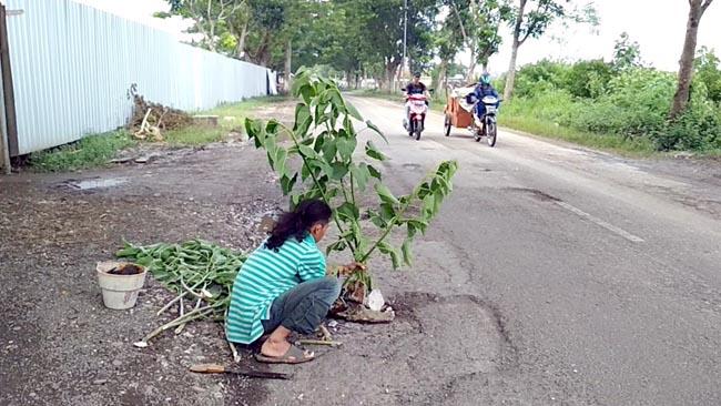 Alasan Keselamatan, Tanaman Berdiri di Jalan Raya
