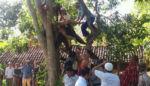 Pangkas Pohon Kelor, Warga Sumber Anyar Mlandingan Tewas Kesetrum
