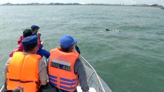 BPSPL Denpasar Pantau Hiu Tutul di Perairan Probolinggo