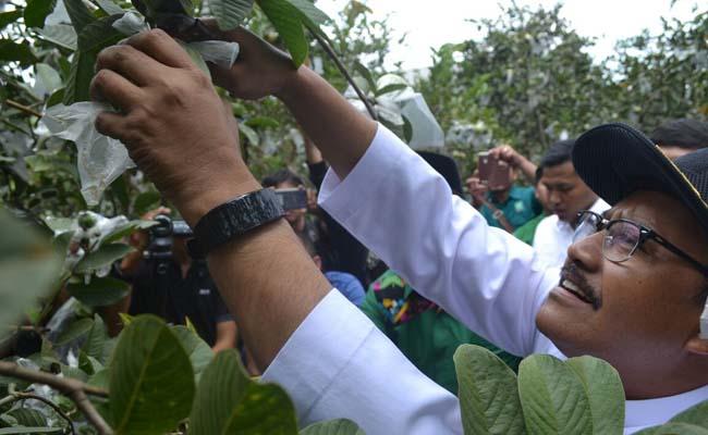 Gus Ipul Berharap Kaum Muda Jatim Geluti Pertanian