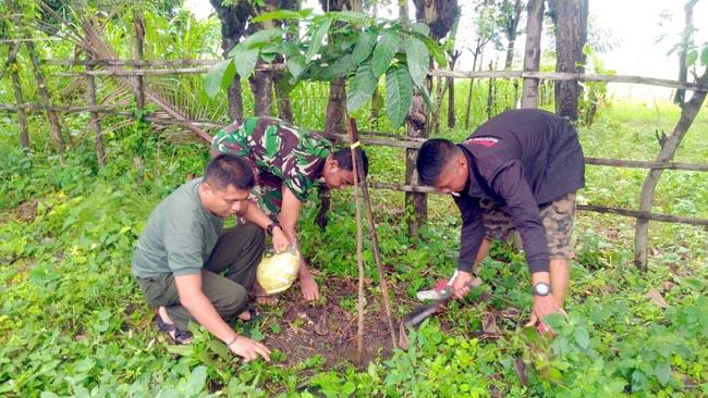 Anggota Koramil Mlandingan Gelar Pemeliharaan Pohon Mahoni