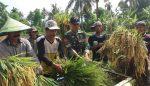 Wujudkan Swasembada Pangan, Babinsa Koramil Mlandingan Bantu Petani Panen