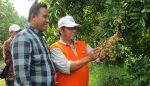 Potensi Wisata Desa Pangkahwetan, Jadi Perhatian Pimpinan Dewan