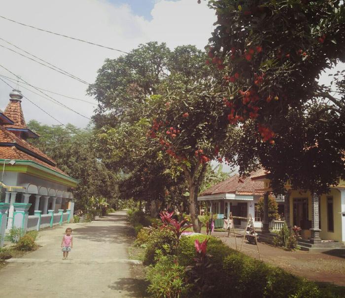 Kecamatan Klakah Kabupaten Lumajang Penghasil Aneka Buah