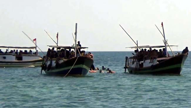 Liburan Imlek, Wisatawan Lihat Hiu Tutul di Perairan Laut Probolinggo